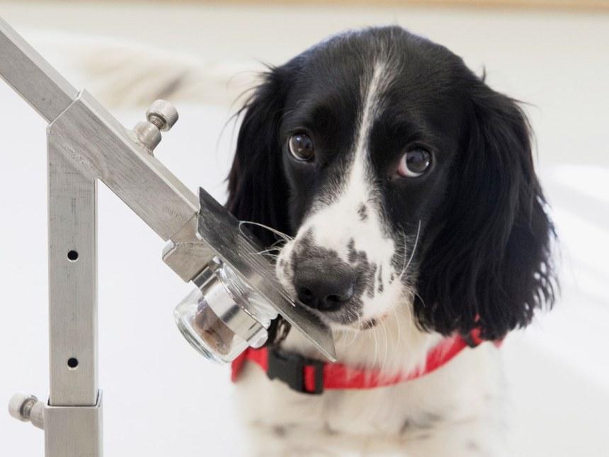 Dog-Malaria-FINAL